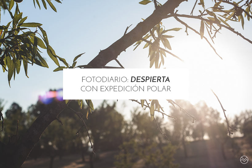 featured-despierta